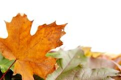 φθινοπωρινά ζωηρόχρωμα φύλ&lam στοκ εικόνα