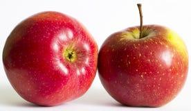Φθινοπωρινά κόκκινα μήλα Στοκ φωτογραφία με δικαίωμα ελεύθερης χρήσης