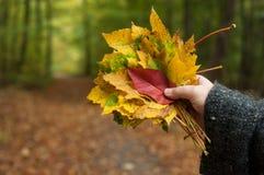φθινοπωρινά φύλλα υπό εξέταση της γυναίκας στο δάσος στοκ εικόνες με δικαίωμα ελεύθερης χρήσης