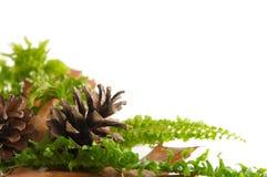 φθινοπωρινά φύλλα arragement στοκ φωτογραφίες