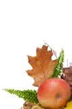 φθινοπωρινά φύλλα arragement στοκ φωτογραφία