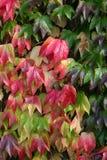 Φθινοπωρινά φύλλα πτώσης στοκ εικόνες με δικαίωμα ελεύθερης χρήσης