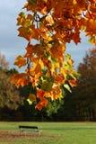 φθινοπωρινά φύλλα στοκ εικόνες