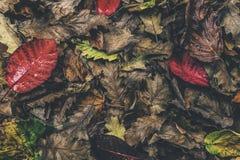 φθινοπωρινά φύλλα Στοκ Εικόνα