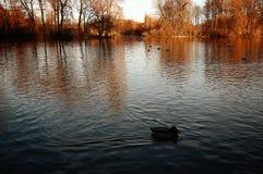 Φθινοπωρινή άποψη Englischer Garten στο Μόναχο Στοκ εικόνες με δικαίωμα ελεύθερης χρήσης