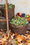 Φθινοπωρινή ακόμα ζωή με τα φρούτα και τα φύλλα σε μια ξύλινη βάση Στοκ φωτογραφία με δικαίωμα ελεύθερης χρήσης