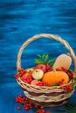 Φθινοπωρινή ακόμα ζωή με τις κολοκύθες, τα μήλα και rowanberry Στοκ Φωτογραφίες