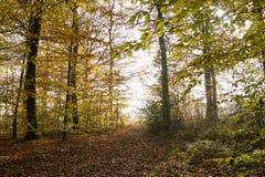Φθινοπωρινή δασώδης περιοχή Στοκ Φωτογραφίες