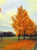 φθινοπωρινή μελαγχολία φύλλων ημέρας κίτρινη στοκ φωτογραφία με δικαίωμα ελεύθερης χρήσης