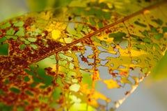 φθινοπωρινή μελαγχολία φύλλων ημέρας κίτρινη Στοκ φωτογραφίες με δικαίωμα ελεύθερης χρήσης