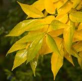 φθινοπωρινή μελαγχολία φύλλων ημέρας κίτρινη Στοκ Φωτογραφία