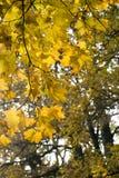 φθινοπωρινή μελαγχολία φύλλων ημέρας κίτρινη Στοκ εικόνες με δικαίωμα ελεύθερης χρήσης