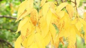 φθινοπωρινή μελαγχολία φύλλων ημέρας κίτρινη απόθεμα βίντεο