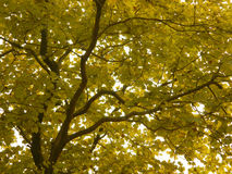 φθινοπωρινή μελαγχολία φύλλων ημέρας κίτρινη στοκ εικόνες