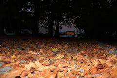 φθινοπωρινή μελαγχολία φύλλων ημέρας κίτρινη Στοκ Εικόνα
