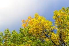 Φθινοπωρινοί δέντρα και μπλε ουρανός Στοκ εικόνα με δικαίωμα ελεύθερης χρήσης