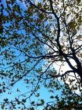 φθινοπωρινοί κλάδοι Στοκ φωτογραφίες με δικαίωμα ελεύθερης χρήσης