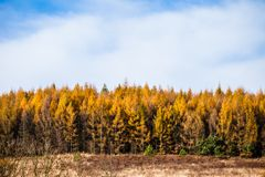 Φθινοπωρινός δασικός και άσπρος βράχος, εθνικό πάρκο Ojcowski, Ojcow, Πολωνία Στοκ φωτογραφία με δικαίωμα ελεύθερης χρήσης