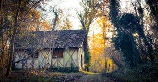 Φθινοπωρινός δασικός δρόμος στοκ φωτογραφίες με δικαίωμα ελεύθερης χρήσης