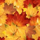 Φθινοπωρινό άνευ ραφής lith 05 ελεύθερη απεικόνιση δικαιώματος