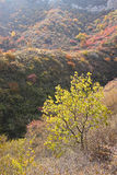 Φθινοπωρινό δάσος βουνών Στοκ εικόνες με δικαίωμα ελεύθερης χρήσης