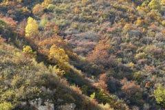 Φθινοπωρινό δάσος βουνών Στοκ Φωτογραφίες
