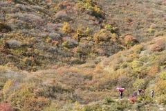 Φθινοπωρινό δάσος βουνών Στοκ Εικόνες