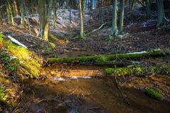 Φθινοπωρινό δάσος τοπίων τον τελευταίο καιρό με το πρώτο χιόνι και το μικρό ποταμό Στοκ Εικόνες