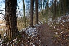 Φθινοπωρινό δάσος τοπίων τον τελευταίο καιρό με το πρώτο χιόνι Στοκ φωτογραφία με δικαίωμα ελεύθερης χρήσης