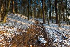 Φθινοπωρινό δάσος τοπίων τον τελευταίο καιρό με το πρώτο χιόνι Στοκ Φωτογραφίες