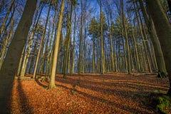 φθινοπωρινό δάσος Στοκ εικόνες με δικαίωμα ελεύθερης χρήσης