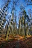 φθινοπωρινό δάσος Στοκ Φωτογραφίες