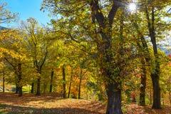 φθινοπωρινό δάσος Στοκ Εικόνες