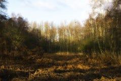 φθινοπωρινό δάσος εκκαθά Στοκ Φωτογραφία