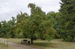 Φθινοπωρινό δάσος με τα σεβάσμια δέντρα και τα άγρια φρούτα μήλων, που βρίσκονται στο εθνικό μνημείο του πάρκου αρχιτεκτονικής το στοκ φωτογραφία με δικαίωμα ελεύθερης χρήσης