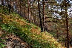 φθινοπωρινό δάσος φτερών Στοκ Εικόνες