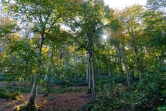 φθινοπωρινό δάσος Στοκ Φωτογραφία