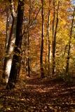 φθινοπωρινό δάσος Στοκ φωτογραφίες με δικαίωμα ελεύθερης χρήσης