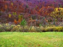 φθινοπωρινό δάσος στοκ φωτογραφία με δικαίωμα ελεύθερης χρήσης