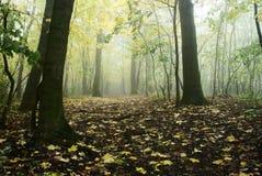 φθινοπωρινό δάσος Στοκ Εικόνα