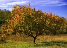 φθινοπωρινό δέντρο στοκ εικόνα με δικαίωμα ελεύθερης χρήσης