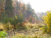 Φθινοπωρινό δασικό τοπίο Πολωνική φύση στοκ εικόνες