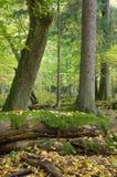 φθινοπωρινό δασικό τοπίο φ& Στοκ Εικόνες