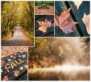Φθινοπωρινό κολάζ Fragas do Eume του narural πάρκου Στοκ Εικόνες