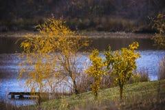 φθινοπωρινό πάρκο Στοκ εικόνα με δικαίωμα ελεύθερης χρήσης