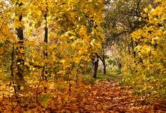 Φθινοπωρινό πάρκο Στοκ Εικόνες