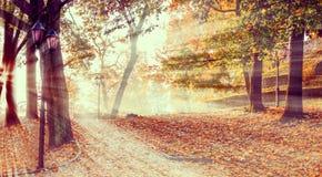 Φθινοπωρινό πρωί στο κεντρικό δημόσιο πάρκο της Ρήγας, Λετονία, ΕΚ στοκ φωτογραφίες με δικαίωμα ελεύθερης χρήσης
