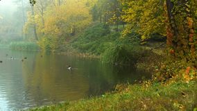 Φθινοπωρινό πρωί της Misty σε μια λίμνη με τις πάπιες και τα πουλιά νερού φιλμ μικρού μήκους