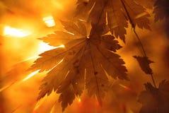 φθινοπωρινό σχέδιο Στοκ Φωτογραφία