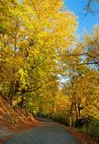 φθινοπωρινό τοπίο πτώσης Στοκ Φωτογραφία